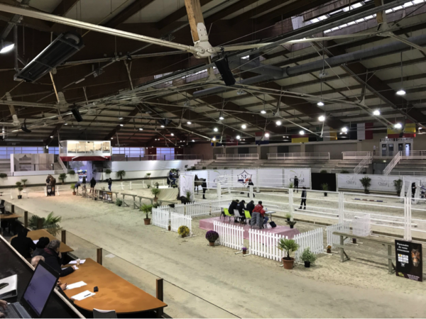 Watching the 3-year-old horses perform in the arena